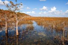 Красивый ландшафт природы с облаками на национальном парке болотистых низменностей в США Популярное место для туристов стоковые фотографии rf