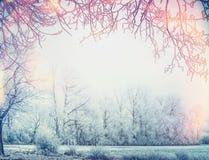 Красивый ландшафт страны зимы с деревьями и рамкой снега Стоковая Фотография RF