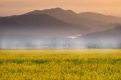 Красивый ландшафт с полем захода солнца и цветка стоковые фото