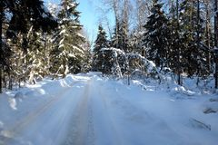 Красивый ландшафт с пригородной дорогой в покрытых снег высоких деревьях в лесе зимы после снежностей на солнечный день Стоковое фото RF