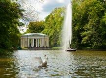 Красивый лебедь на озере в парке Sofiyivsky в Uman, Украине стоковые изображения rf
