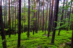 Красивый лес весны в чехии стоковое изображение rf