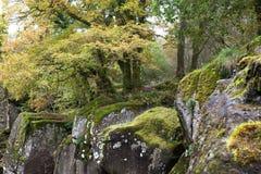 Красивый лес вокруг водопада Braklynn в Шотландии Стоковое Изображение
