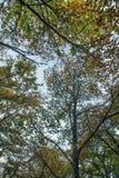 Красивый лес в зоне Monchique, Португалия каштана осени Стоковое Фото