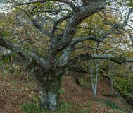 Красивый лес в зоне Monchique, Португалия каштана осени Стоковые Фото