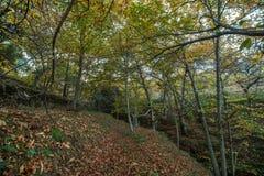 Красивый лес в зоне Monchique, Португалия каштана осени Стоковая Фотография RF
