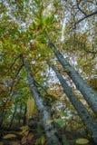 Красивый лес в зоне Monchique, Португалия каштана осени Стоковое Изображение RF