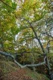 Красивый лес в зоне Monchique, Португалия каштана осени Стоковые Фотографии RF
