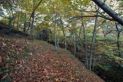 Красивый лес в зоне Monchique, Португалия каштана осени Стоковые Изображения RF