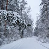 Красивый лес зимы со снежными деревьями и белой снежной дорогой Ветвь сосны над дорогой и много хворостин покрытых со снегом стоковое изображение