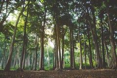Красивый лес лета с различными деревьями Стоковое Фото