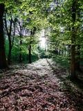 Красивый лес с солнечностью стоковая фотография