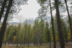 Красивый лес Стоковое Изображение RF