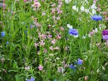 Красивый луг предпосылки фото цветков стоковое фото rf