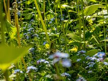 Красивый луг цветка весной стоковое фото rf