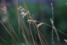 Красивый макрос конца-вверх сухой травы против сильно несосредоточенной предпосылки Природа, фото искусства для плаката Стоковое фото RF