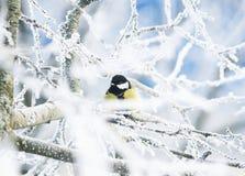 Красивый маленький chickadee птицы в парке зимы сидит на branc Стоковая Фотография RF