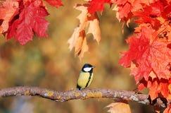Красивый маленький titmouse птицы сидя в саде осени на th стоковые фото