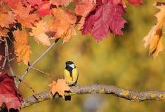 Красивый маленький titmouse птицы сидя в саде осени на th стоковые фотографии rf