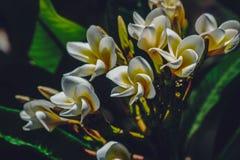 Красивый массив белых и желтых цветков Стоковое Изображение RF