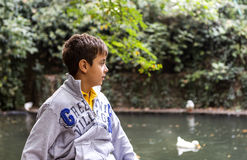 Красивый мальчик смотря уток Стоковая Фотография