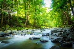 Красивый мечтательный поток горы в мечтательном леса красивое Стоковое фото RF