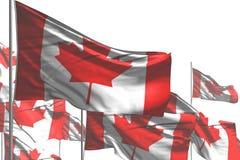 Красивый много флагов Канады волна изолированная на бело- любая иллюстрация флага 3d пиршества иллюстрация вектора