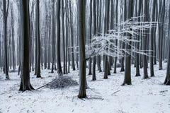 Красивый морозный ландшафт зимы Стоковые Фотографии RF