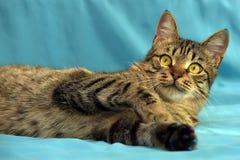 Красивый молодой кот tabby стоковые изображения rf