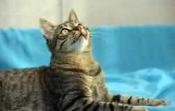 Красивый молодой кот tabby стоковое изображение rf