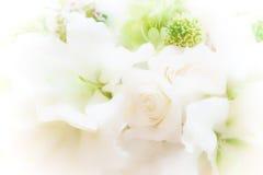 Красивый мягкий цветок фокуса с предпосылкой солнечного света утра , w Стоковое Изображение