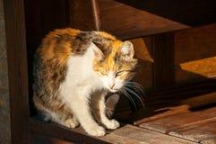 Красивый нагретый кот сидя в солнце и стоковая фотография