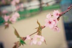 Красивый настроение весны Стоковые Изображения