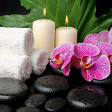 Красивый натюрморт камней Дзэн с падениями, зацветая хворостина курорта Стоковые Фотографии RF