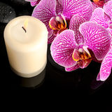 Красивый натюрморт курорта зацветая хворостины обнажал фиолетовую орхидею Стоковая Фотография RF