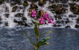 Красивый небольшой водопад с цветком стоковые изображения