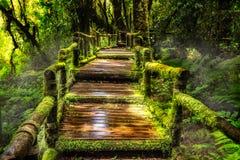 Красивый дождевой лес на следе природы ka ang Стоковое Изображение