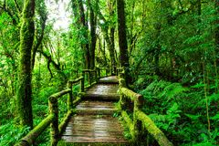 Красивый дождевой лес на следе природы ka ang стоковые фотографии rf