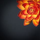 Красивый оранжевый цветок лотоса Стоковая Фотография RF