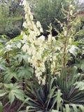 красивый орнаментальный завод для сада белые цветки на зеленом кусте стоковое фото rf
