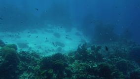 Красивый отснятый видеоматериал 4k серий рыб плавая вокруг кораллового рифа на дне моря Изумляя морская флора и фауна глубина оке акции видеоматериалы