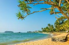 Красивый одичалый и экзотический карибский пляж стоковое изображение rf