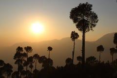Силуэт дерева на заходе солнца стоковое фото rf