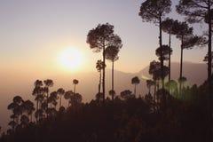 силуэт дерева на заходе солнца стоковое изображение