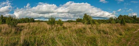 Красивый панорамный взгляд плотно overgrown травы сельского луга Стоковое фото RF