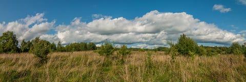 Красивый панорамный взгляд плотно overgrown травы сельского луга Стоковое Фото