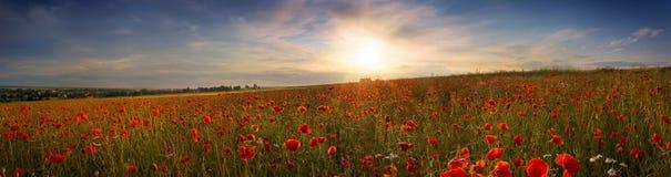 Красивый панорамный взгляд маков на заходе солнца Стоковое Фото
