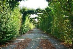 Красивый парк в Schoenbrunn, вене Стоковые Фотографии RF