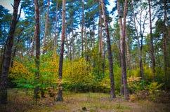 Красивый парк осени в Kyiv, Украине Стоковое Изображение