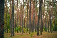 Красивый парк осени в Kyiv, Украине Стоковые Изображения